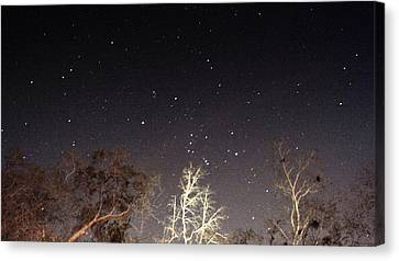 Night Sky Canvas Print by Paul  Wilford
