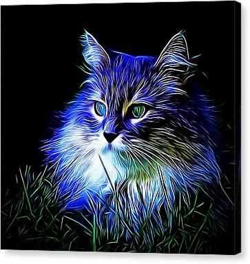 Night Stalker Canvas Print by Kathy Kelly