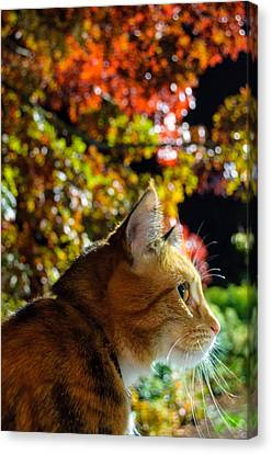 Canvas Print featuring the photograph Night Stalker by Tikvah's Hope