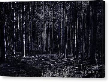 Woodlands Scene Canvas Print - Night Thicket  by Jorgo Photography - Wall Art Gallery