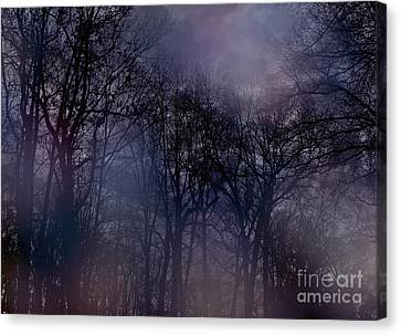 Nightfall In The Woods Canvas Print by Sandy Moulder