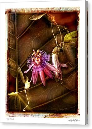 Canvas Print featuring the photograph Nightshade by Linda Olsen