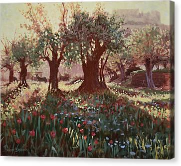 Nimrods Castle, Northern Galilee, Israel Canvas Print by Graham Braddock