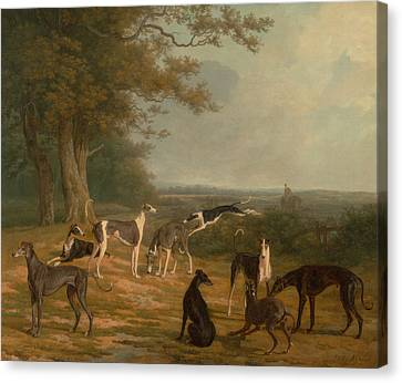 Greyhound Canvas Print - Nine Greyhounds In A Landscape by Celestial Images