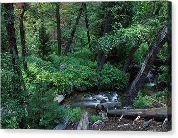 Nine Mile Creek - Golden Trout Wilderness Canvas Print by Soli Deo Gloria Wilderness And Wildlife Photography