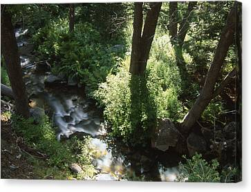 Ninemile Creek Canvas Print by Soli Deo Gloria Wilderness And Wildlife Photography