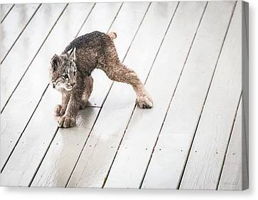 Canvas Print featuring the photograph Ninja Lynx Kitty by Tim Newton