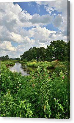 Nippersink Creek Milkweeds Canvas Print