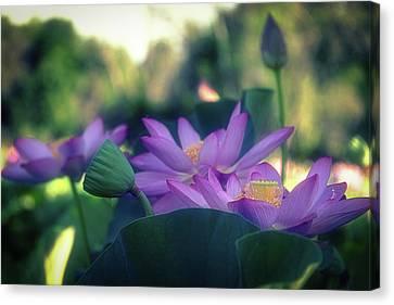 No Mud, No Lotus Canvas Print