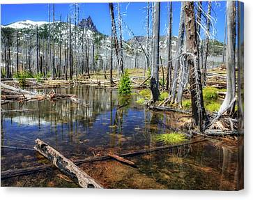Canvas Print featuring the photograph No Name Pond by Cat Connor