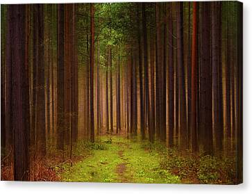 No Way Out Canvas Print by Svetlana Sewell