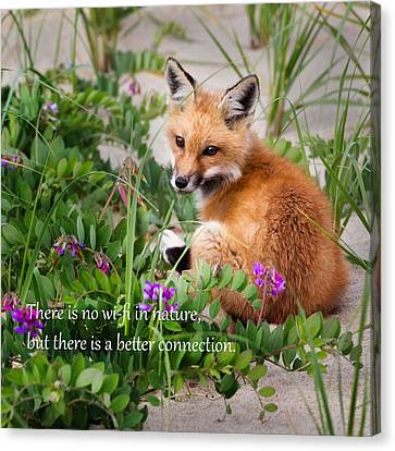 Fox Kit Canvas Print - No Wifi Square by Bill Wakeley