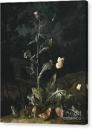 Nocturnal Forest Floor Still Life With A Thistle Canvas Print