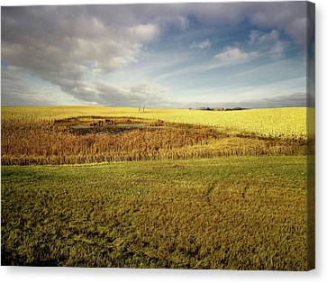 Nodak Field Canvas Print