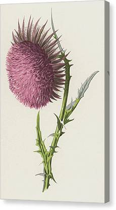 Thistle Canvas Print - Nodding Thistle by Frederick Edward Hulme