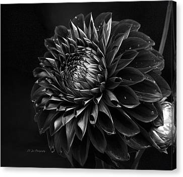 Noir Beauty Canvas Print