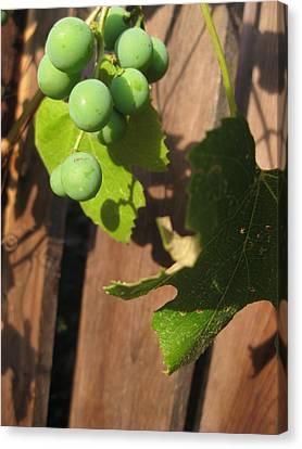 Grape Leaf Canvas Print - Noir by John Conrad Johnson III