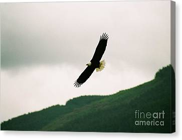 Nooksack Eagle Canvas Print by Brent Easley