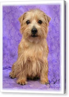 Norfolk Terrier Pup Canvas Print by Maxine Bochnia