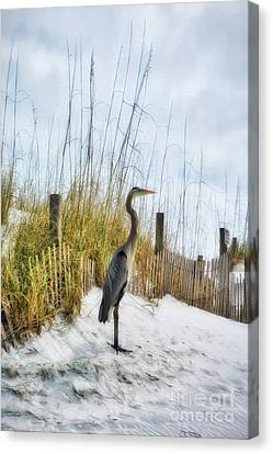 Norriego Point Heron Canvas Print