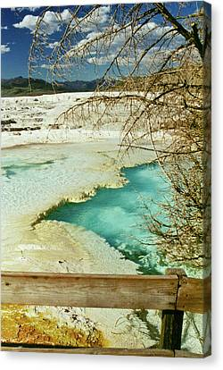 Norris Hot Spring Canvas Print by Greg Norrell