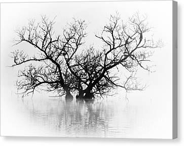 Norris Lake April 2015 5 Canvas Print