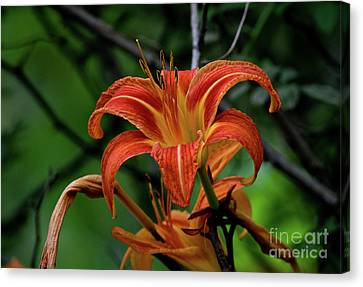Canvas Print featuring the photograph Norris Lake Daylily 2 by Douglas Stucky
