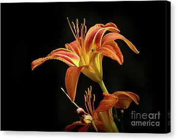 Canvas Print featuring the photograph Norris Lake Daylily by Douglas Stucky
