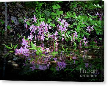 Canvas Print featuring the photograph Norris Lake Floral 2 by Douglas Stucky