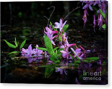 Canvas Print featuring the photograph Norris Lake Floral by Douglas Stucky