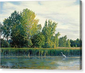 North Of The Grade-great Egret Canvas Print by Bruce Morrison