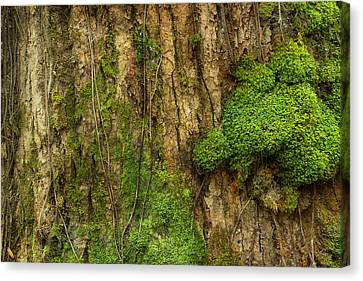 Canvas Print featuring the photograph North Side Of The Tree by Mike Eingle