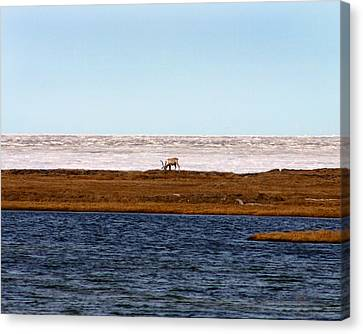 North Slope Canvas Print