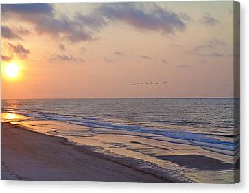 Sea Birds Canvas Print - North Topsail Beach Glory by Betsy Knapp
