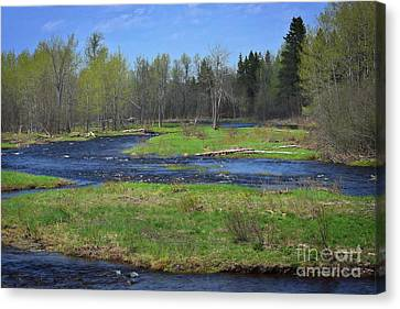 North Woods Dreams Canvas Print by Skip Willits