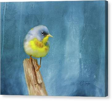Northern Blue Song Bird Canvas Print by Colleen Taylor