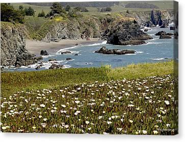 Northern California Coast Scene Canvas Print by Mick Anderson