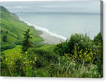 Northern California Seascape Canvas Print by Nick  Boren