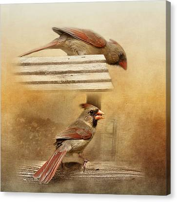 Northern Cardinals At Sunrise Canvas Print by TnBackroadsPhotos
