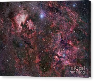 Northern Cygnus Canvas Print by Robert Gendler