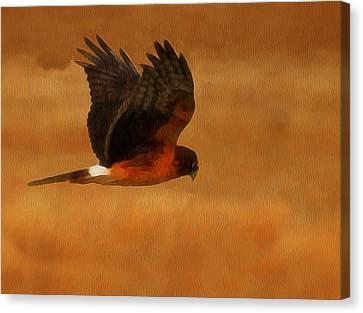 Northern Harrier Digital Art Canvas Print