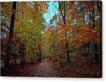 Maine Mountains Canvas Print - Northern Loop Trail by Rick Berk