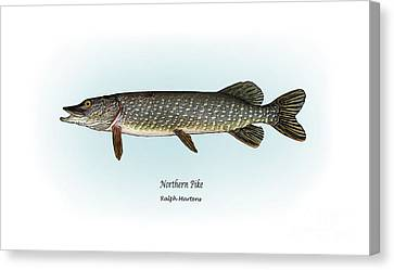 Northern Pike Canvas Print by Ralph Martens