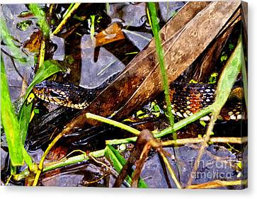Canvas Print featuring the mixed media Northern Water Snake by Olga Hamilton
