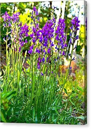 Canvas Print featuring the photograph Northern Wildflowers by Tom Kelly