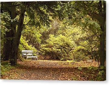 Northumberland, England Park Bench Canvas Print by John Short
