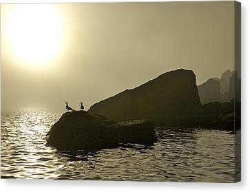 Norway, Tromso, Silhouette Of Pair Canvas Print by Keenpress