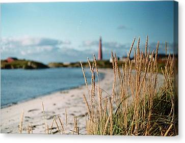 Norwegian Grass Canvas Print by Gregory Barger