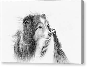 Shetland Sheepdog Canvas Print - Nose To The Wind by Pat Eisenberger