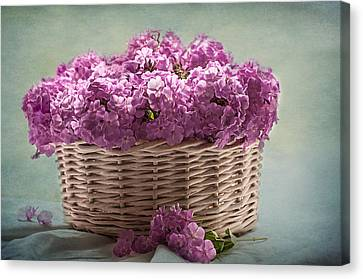 Nostalgia And Phlox Canvas Print by Maggie Terlecki